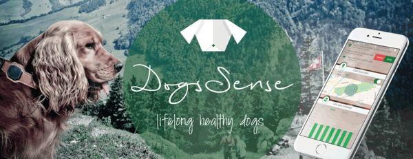 DogSense, das Technik-Halsband für Hunde