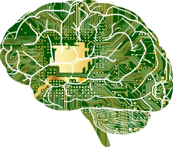 Das menschliche Gehirn als Vorbild Neuronaler Netze
